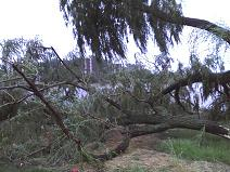 damage in westmont
