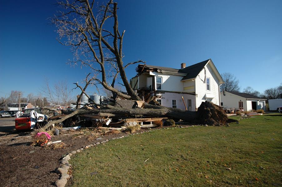 Large tree and house damage (Caledonia)