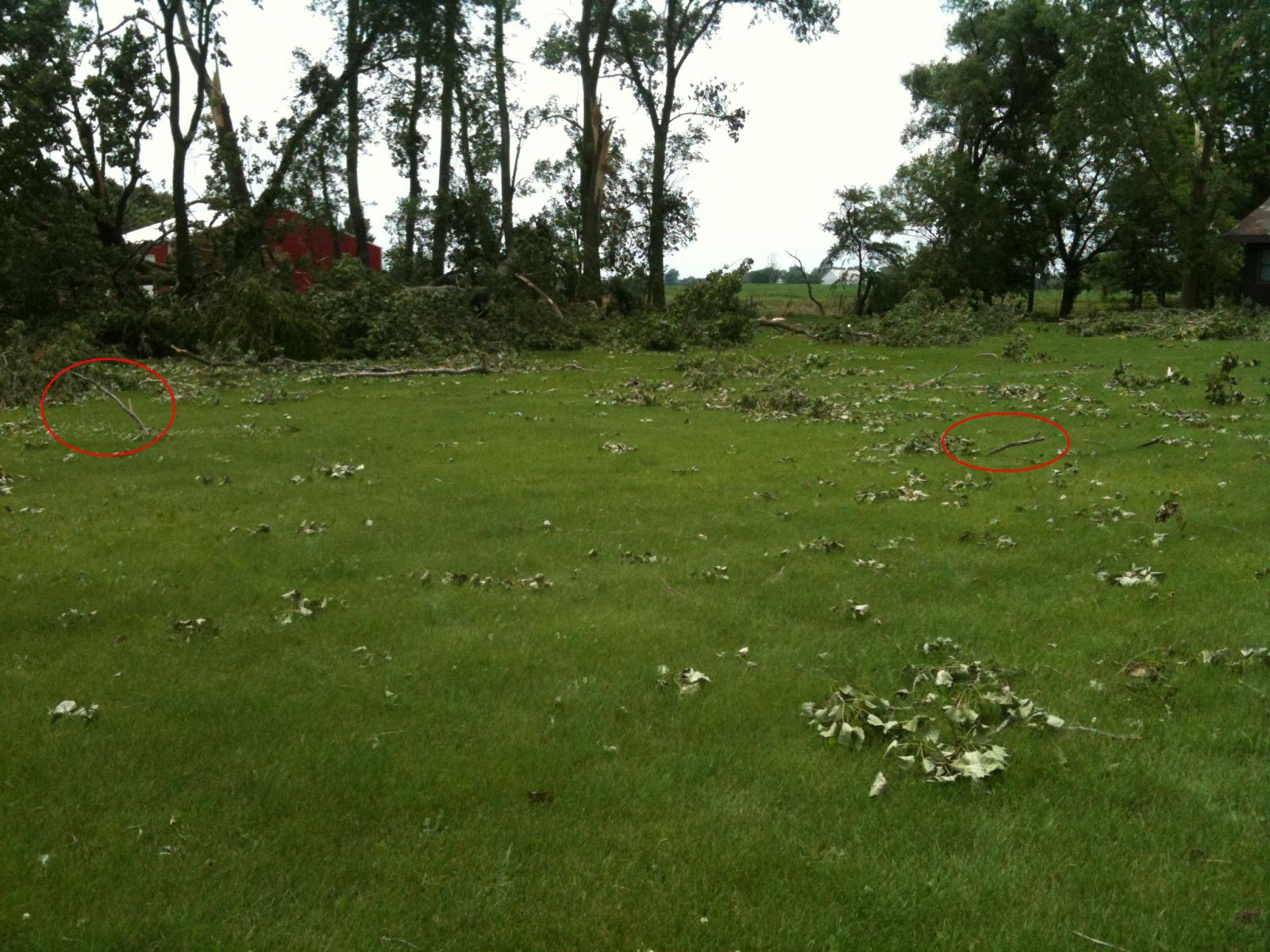 Extensive damage and branches speared in ground in convergent pattern