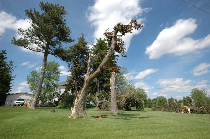 Several large trees were snapped along Hwy 72 east of Forreston, IL.