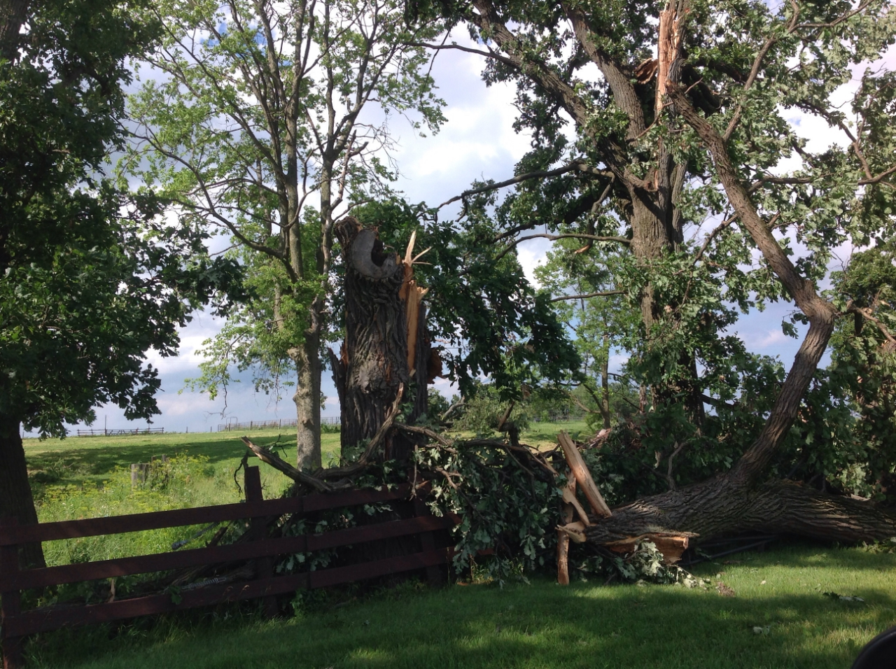 Tree damage 3 miles ESE of Earlville